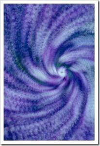 Petunia Nebula